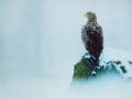 Vortrag Steichen: Seeadler
