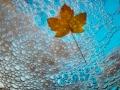 Vortrag Bosboom: Herbst