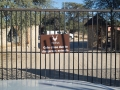 namibia_2012_g12_02430