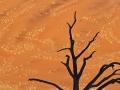 namibia_2012_mk3_108974