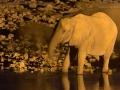 afrikanischer_elefant_5dmk3_06764