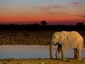 afrikanischer_elefant_5dmk3_07361