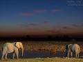 afrikanischer_elefant_5dmk3_07396