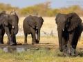 afrikanischer_elefant_5dmk3_07560