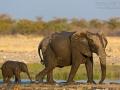 afrikanischer_elefant_5dmk3_07763
