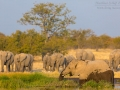 afrikanischer_elefant_5dmk3_07789