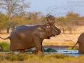 afrikanischer_elefant_5dmk3_07894