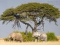 afrikanischer_elefant_5dmk3_08299_bis_08307
