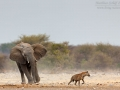 afrikanischer_elefant_5dmk3_09292