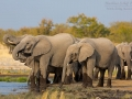 afrikanischer_elefant_5dmk3_10090