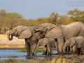 afrikanischer_elefant_5dmk3_10104