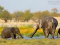 afrikanischer_elefant_5dmk3_10140