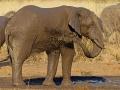 afrikanischer_elefant_mk4_42208