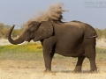 afrikanischer_elefant_mk4_94306