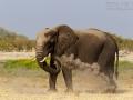 afrikanischer_elefant_mk4_94338