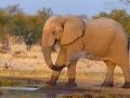 afrikanischer_elefant_mk4_94678