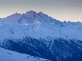 Alpendohle, Alpine Chough, Pyrrhocorax graculus