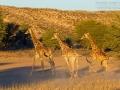 giraffe_mk4_91130