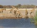 giraffe_mk4_95458