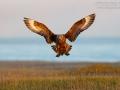 Y wie Y-förmige Flügelhaltung beim Landen