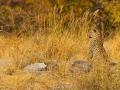 leopard_7d_43309
