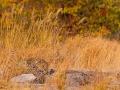 leopard_mk4_95143