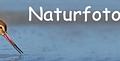 nfn_logo