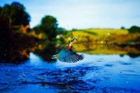 Eisvogel in seinem natürlichen Habitat