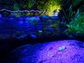 Leuchtender Skorpion