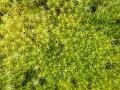 Moos, Bryophyte, moss