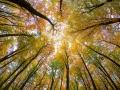 Pfälzer Wald im Herbst, Autumn scenery